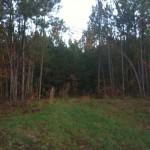 Backyard 6 - Hill
