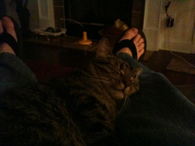 Vernie Snoozing on my Leg